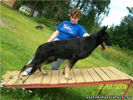 """Примерно так растягивают на  """"окопе """" собаку (фото п-к  """"Балтийский Берег """")"""